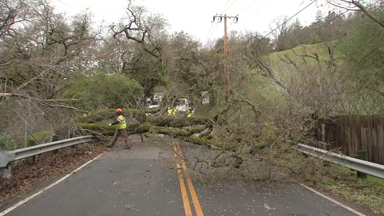 <div class='meta'><div class='origin-logo' data-origin='none'></div><span class='caption-text' data-credit='KGO-TV'>A large oak tree is seen across a road after falling in Lafayette, Calif. on Wednesday, Jan. 16, 2019.</span></div>