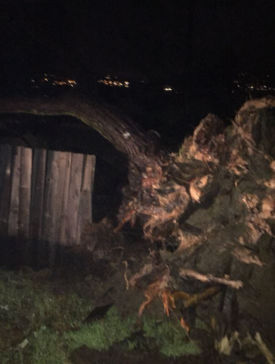 <div class='meta'><div class='origin-logo' data-origin='none'></div><span class='caption-text' data-credit='KGO-TV'>A downed tree is seen in Mill Valley, Calif. on Wednesday, Jan. 16, 2019</span></div>