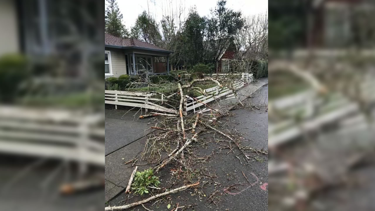 <div class='meta'><div class='origin-logo' data-origin='none'></div><span class='caption-text' data-credit='KGO-TV'>This image shows a Ginko tree knocked over by strong winds in Larkspur, Calif. on Thurday, Jan. 17, 2019.</span></div>