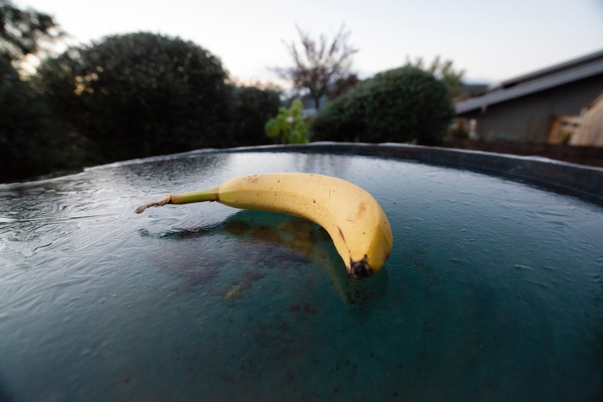 <div class='meta'><div class='origin-logo' data-origin='none'></div><span class='caption-text' data-credit='KGO-TV/Wayne Freedman'>The ice on this birdbath in San Anselmo, Calif. was so thick, it could support this banana on Tuesday, Feb. 5, 2019.</span></div>