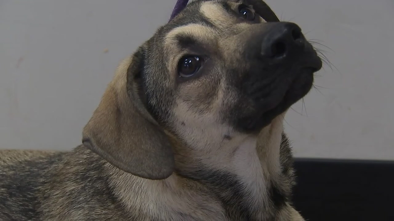 Hoke County Animal Shelter prepares for surrender of 50 animals