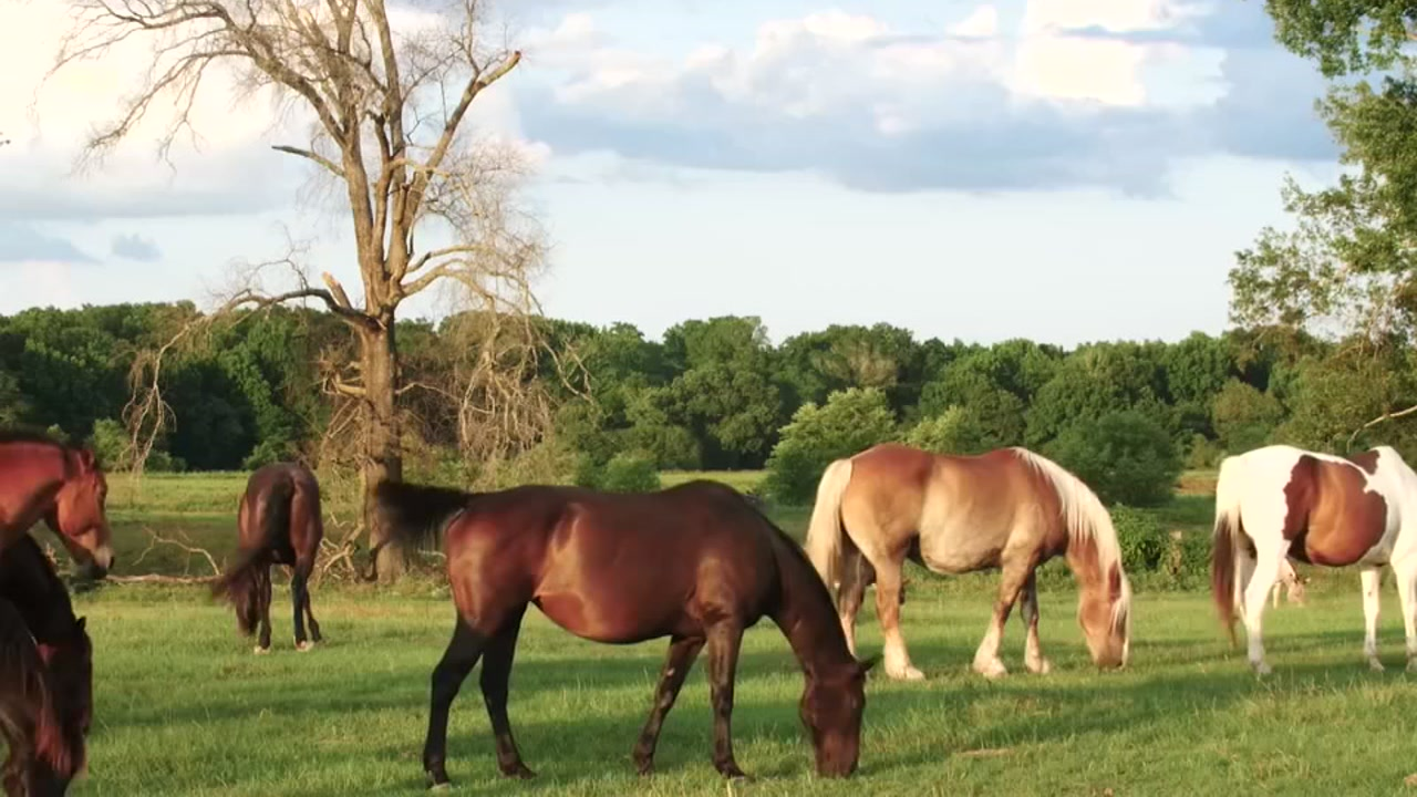 Naked cleveland amory black beauty ranch texas leg