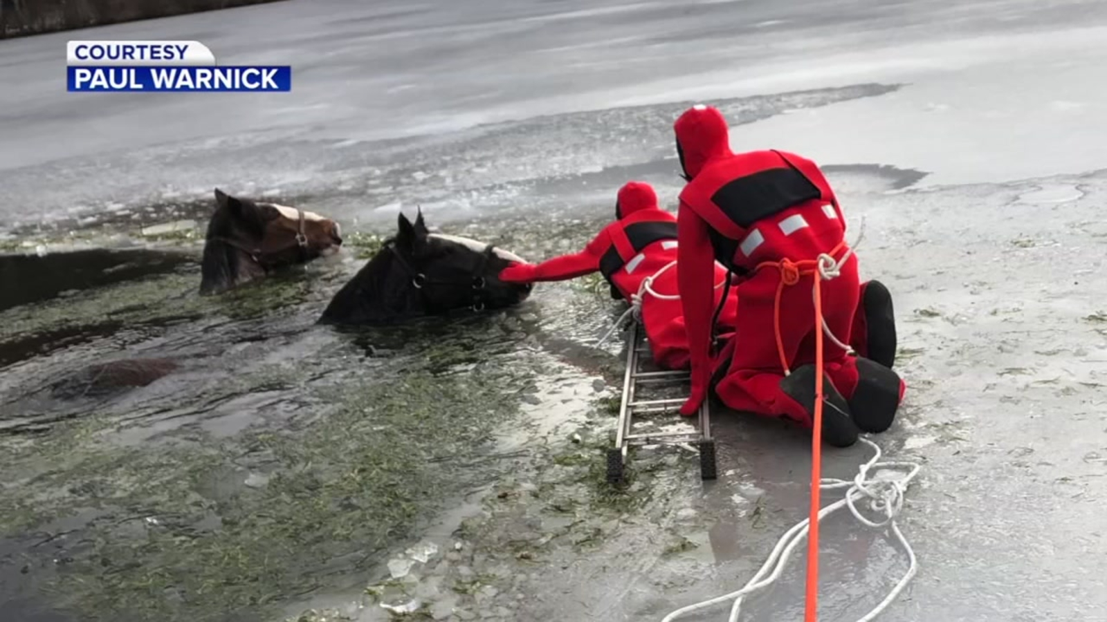 2 Clydesdale horses rescued from icy lake in Pennsylvania