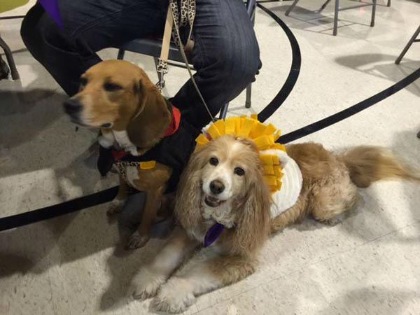 "<div class=""meta image-caption""><div class=""origin-logo origin-image none""><span>none</span></div><span class=""caption-text"">Adorable pictures of rescue dogs celebrating Mardi Gras at their reunion (KTRK Photo/ Casey Curry)</span></div>"