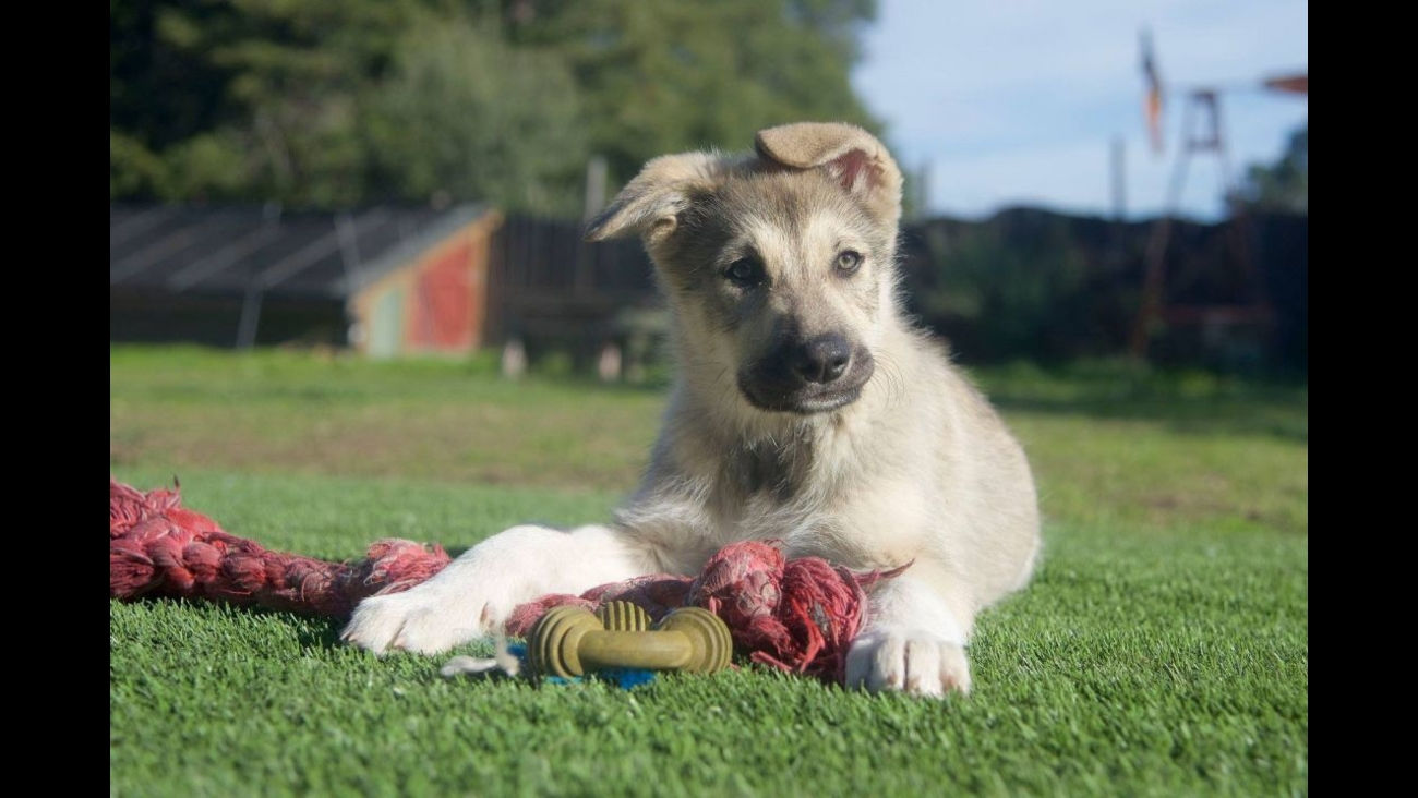 Your Daily Dose Of Cute Puppies Up For Adoption Now In The Bay Area