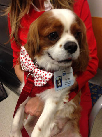 """<div class=""""meta image-caption""""><div class=""""origin-logo origin-image kabc""""><span>KABC</span></div><span class=""""caption-text"""">Tucker shows off his Valentine's Day heart covered bow tie as he visits children on Friday, Feb. 13, 2015.</span></div>"""