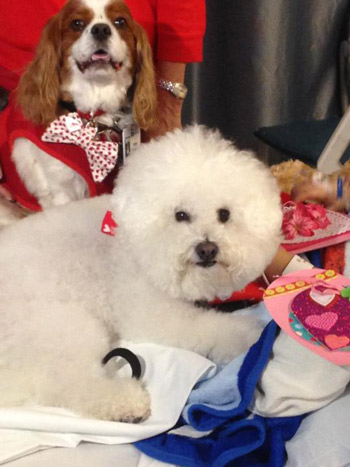"""<div class=""""meta image-caption""""><div class=""""origin-logo origin-image kabc""""><span>KABC</span></div><span class=""""caption-text"""">Tommy and Tucker show off their Valentine's Day spirit as they visit sick children and the elderly on Friday, Feb. 13, 2015.</span></div>"""