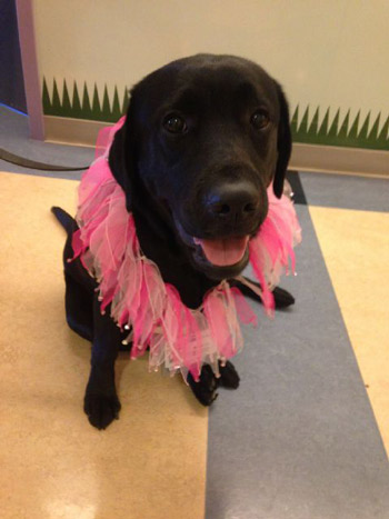 """<div class=""""meta image-caption""""><div class=""""origin-logo origin-image kabc""""><span>KABC</span></div><span class=""""caption-text"""">Therapy dog Bubbles is wearing a pink frilly collar during a visit to the Mattel Children's Hospital UCLA and UCLA Medical Center on Friday, Feb. 13, 2015.</span></div>"""