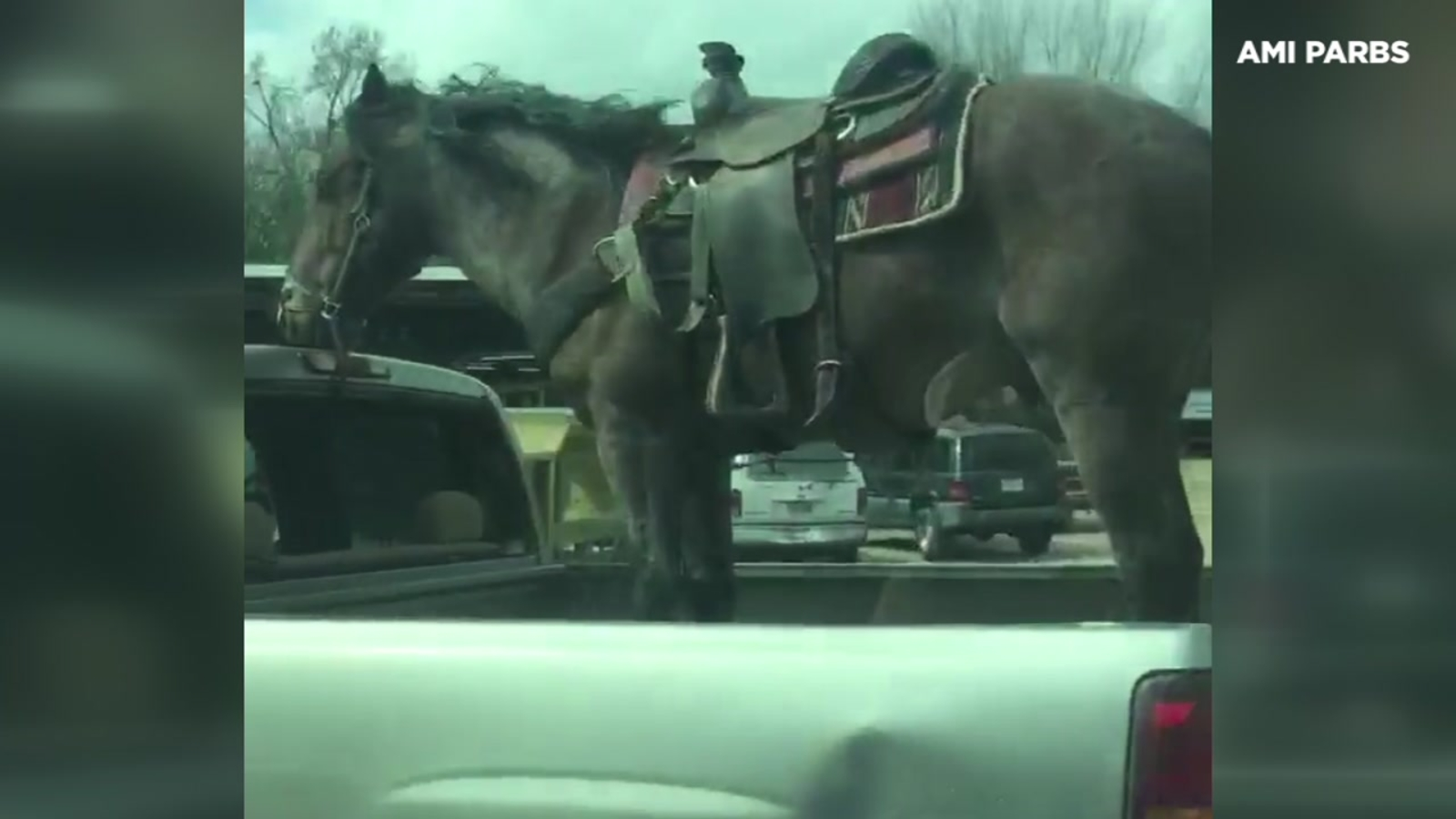 Horse In The Bed Of Pickup Truck Going 70 Mph On Us 59 Abc13 Houston