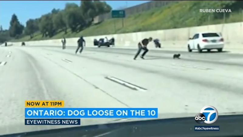 VIDEO: Dog runs loose on IE freeway