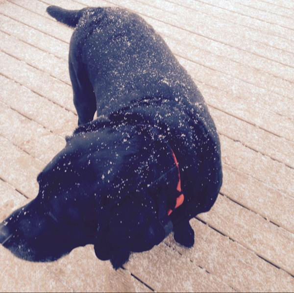 "<div class=""meta image-caption""><div class=""origin-logo origin-image none""><span>none</span></div><span class=""caption-text"">This canine is enjoying the snow!</span></div>"