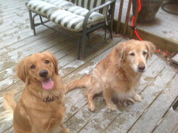 """<div class=""""meta image-caption""""><div class=""""origin-logo origin-image none""""><span>none</span></div><span class=""""caption-text"""">These adorable dogs don't seem to mind the weather!</span></div>"""