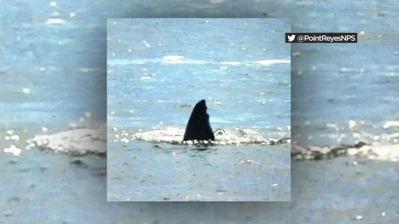 Mysterious fin spotted at Drakes Beach likely belongs to a whale