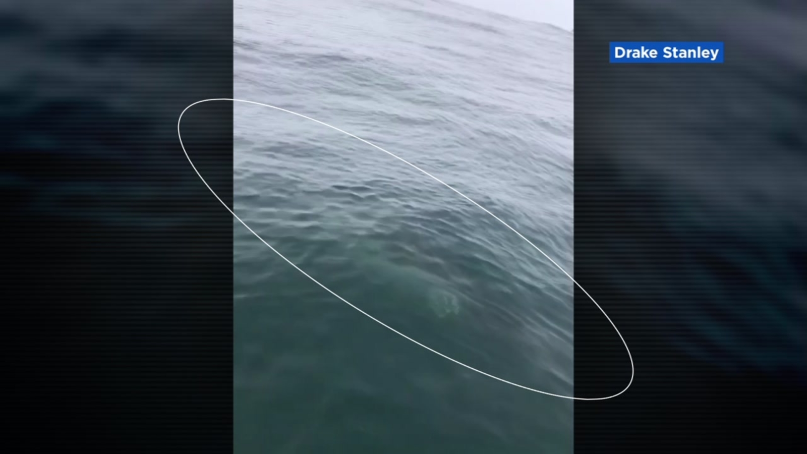 Mavericks jet ski operator rescues 8 surfers from close encounter with huge  great white shark