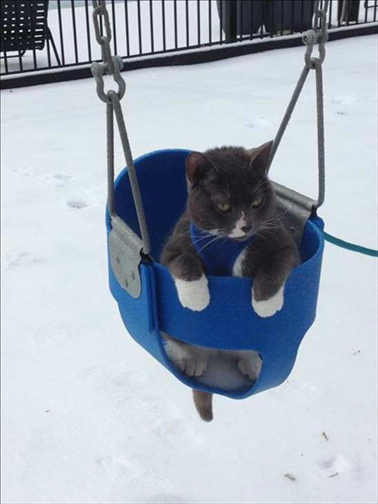 "<div class=""meta image-caption""><div class=""origin-logo origin-image none""><span>none</span></div><span class=""caption-text"">Schroeder enjoying the snow! (WTVD Photo/ Emily Butler)</span></div>"
