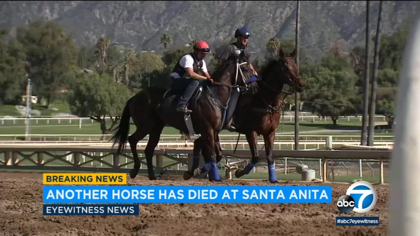 23rd Horse Dies At Santa Anita After Racing Accident
