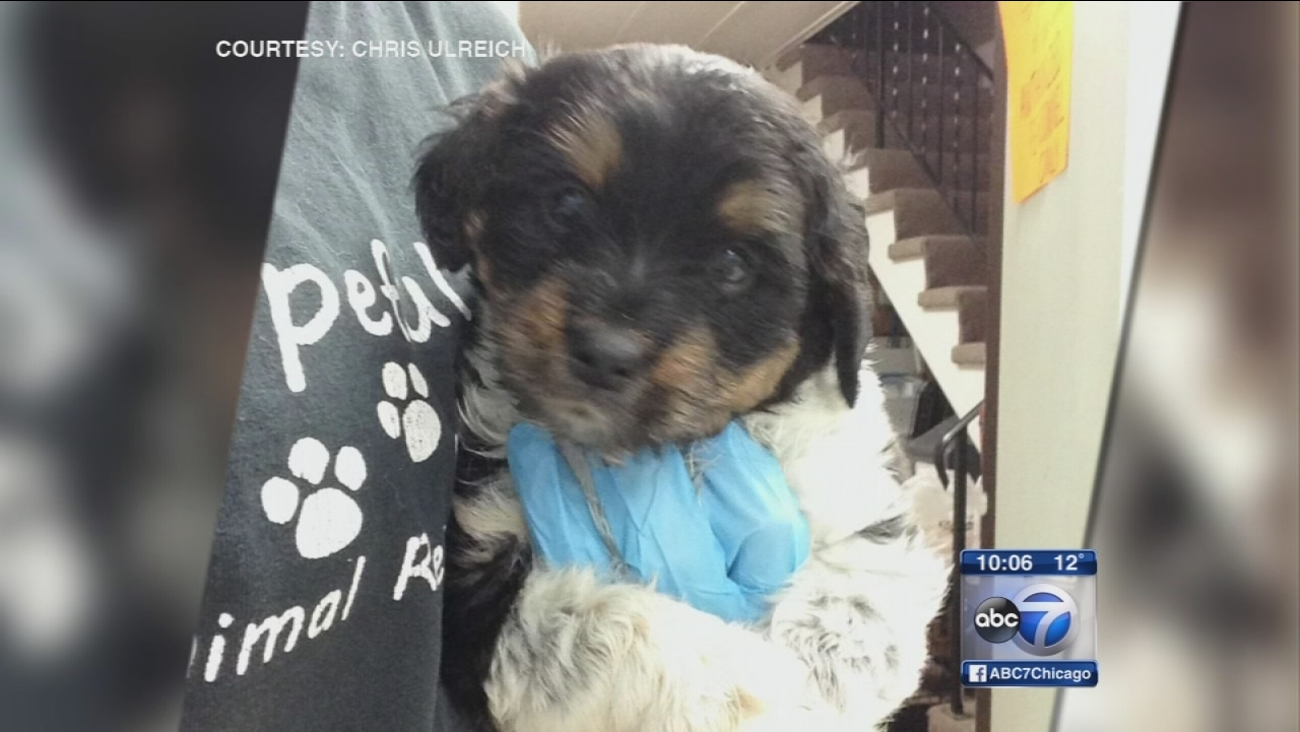 Joliet animal shelter pleads for thief to return sick puppy