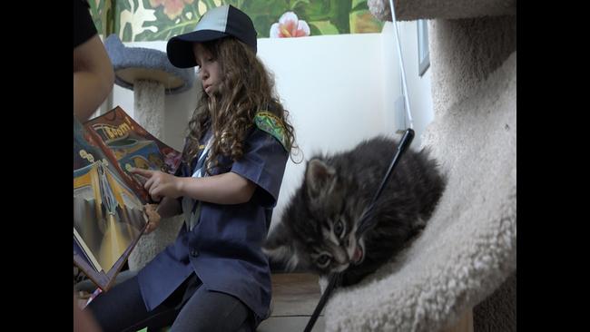 San Jose sisters saving hundreds of kittens through 'Mini Cat Town