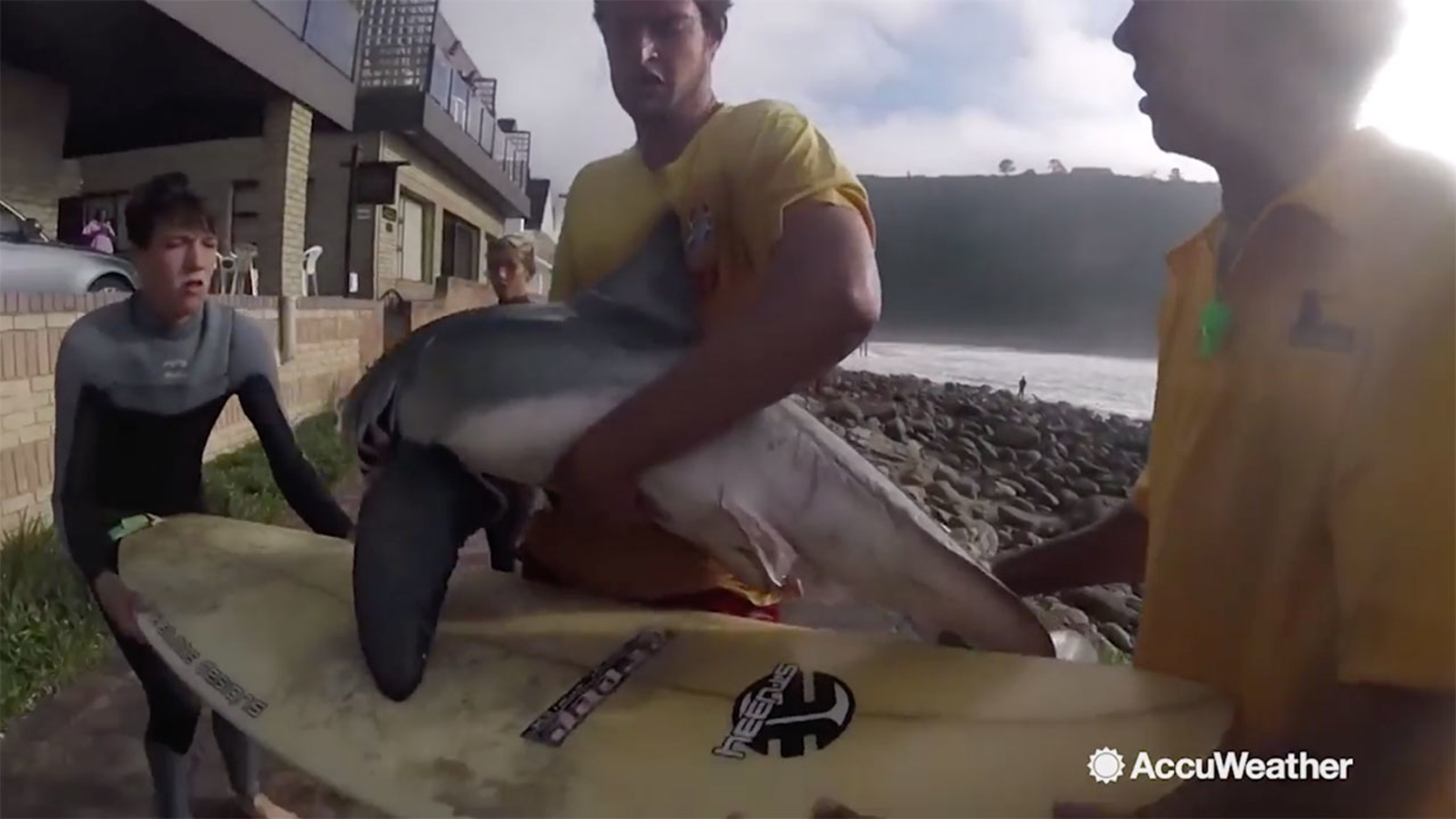 Surfers, lifeguards rescue baby great white shark stranded on rocky coastline