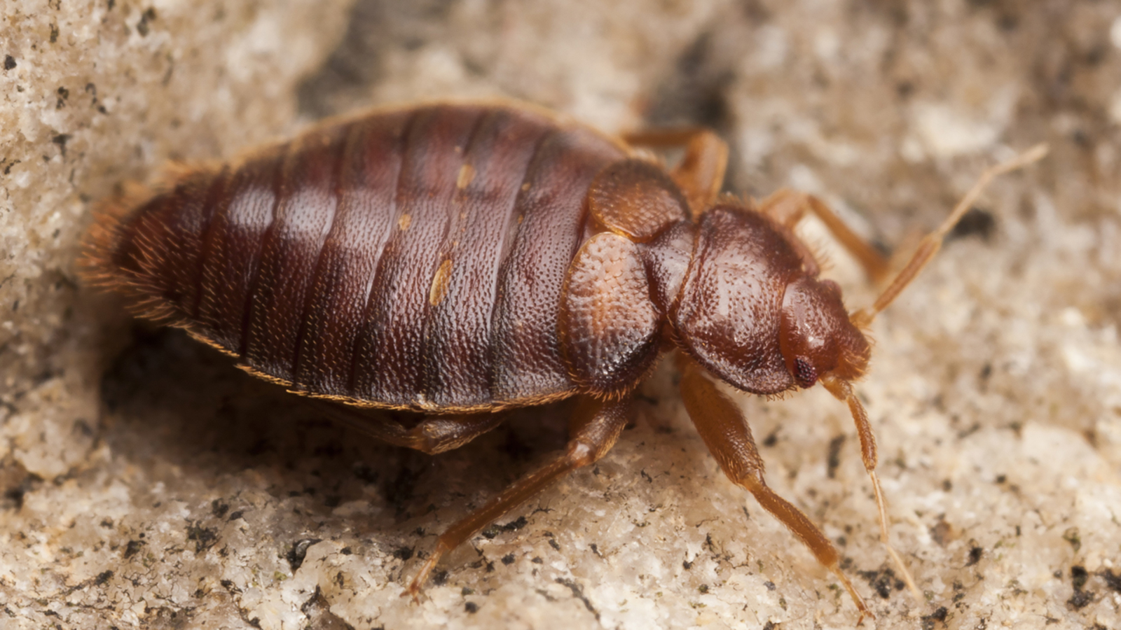 Philadelphia charter school closed Thursday due to bed bugs, officials say