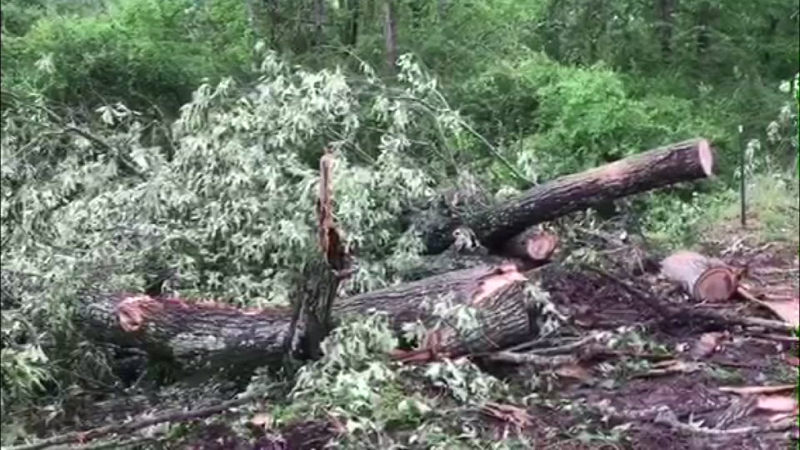 Tree fall during storm kills 2 kids in Angelina County