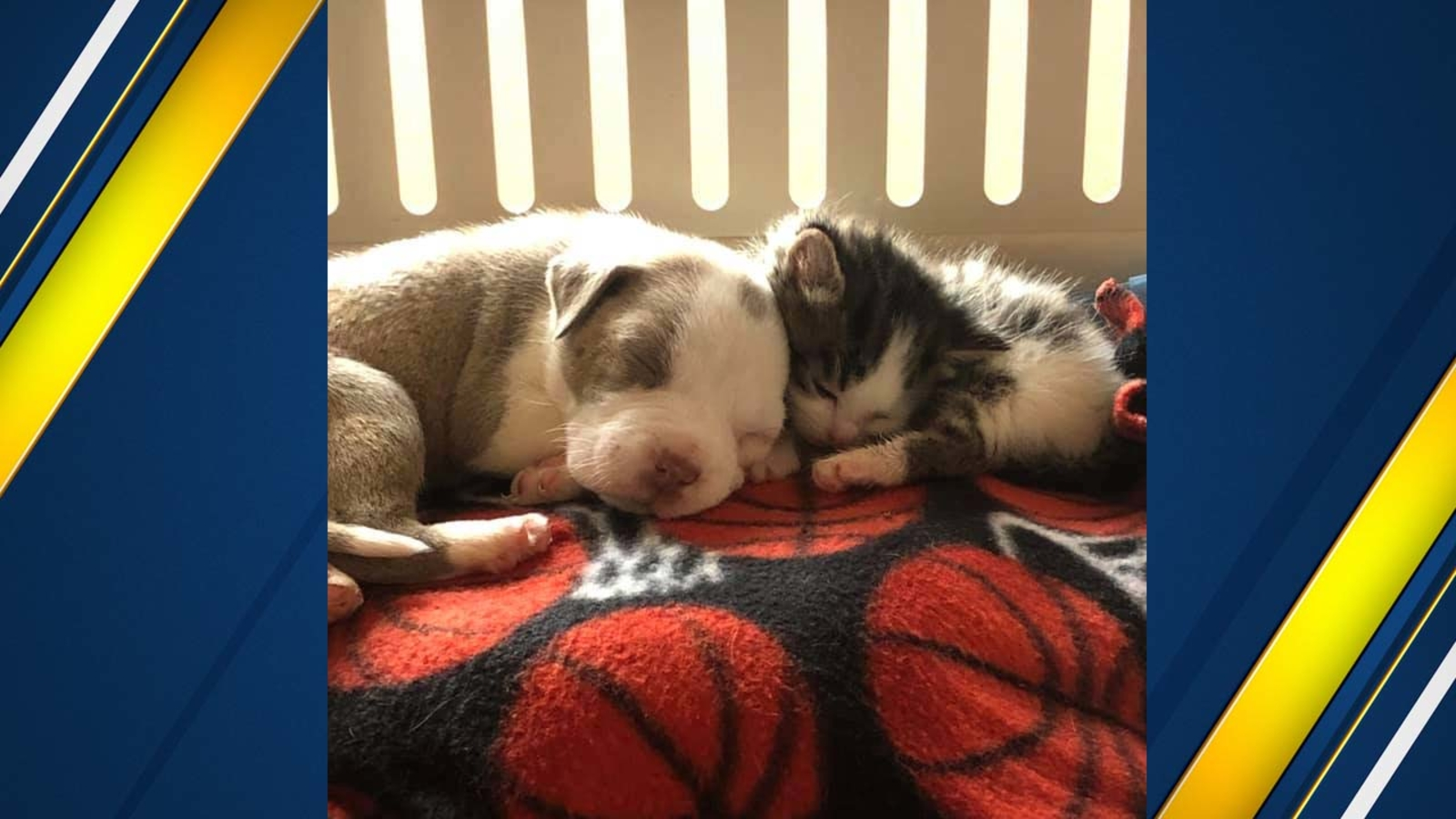 Fresno Humane looking for donations to help inseparable puppy and kitten