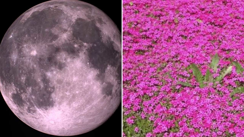 What is a pink moon? Meaning behind nickname