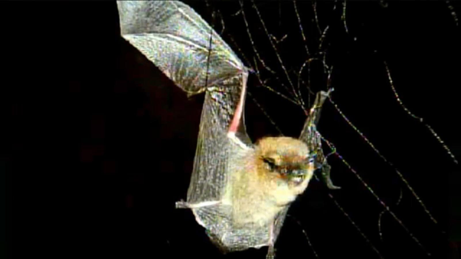Rabid bat found in Anaheim, Orange County health officials say