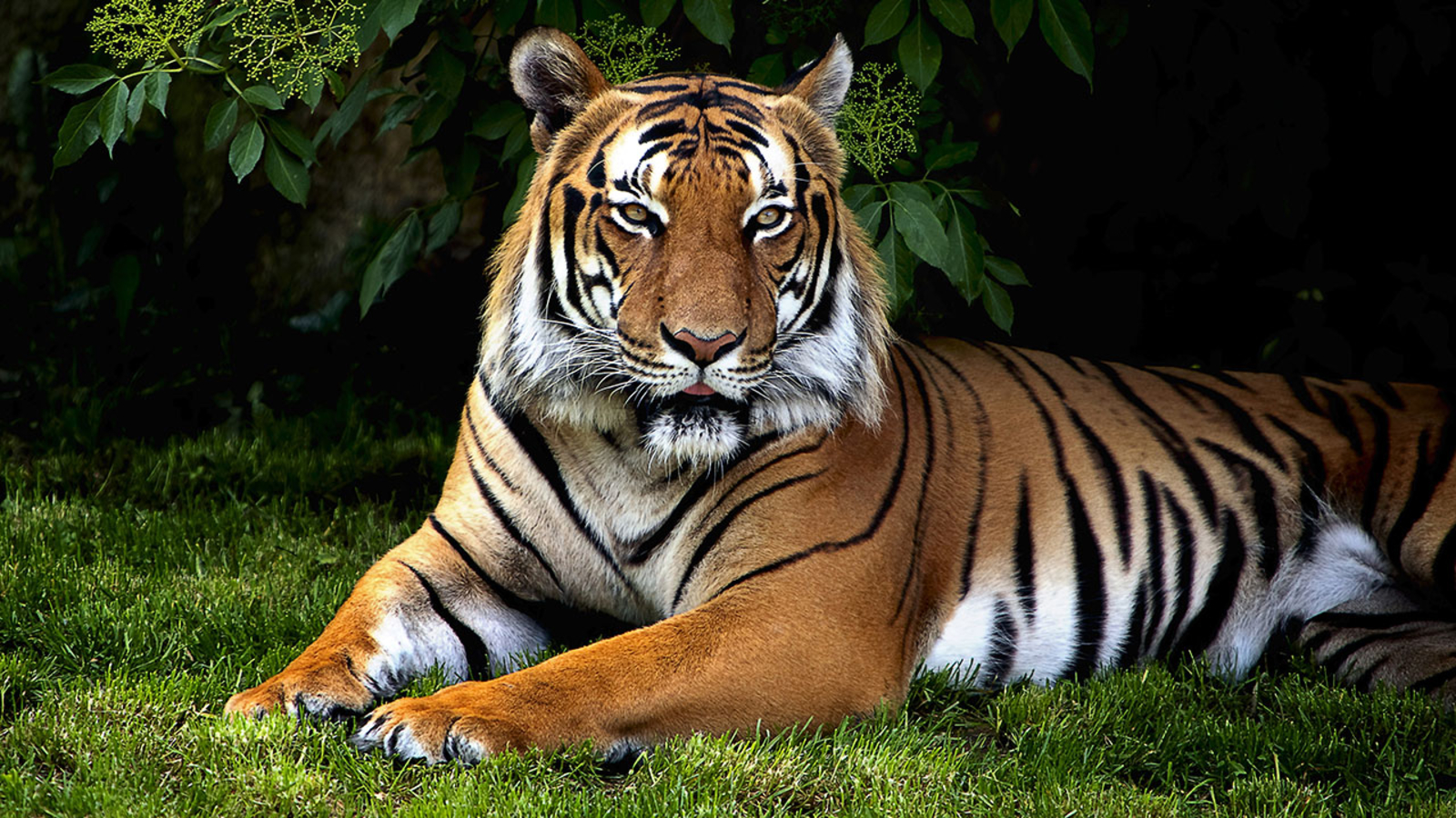 Topeka Zoo keeper injured in incident with tiger