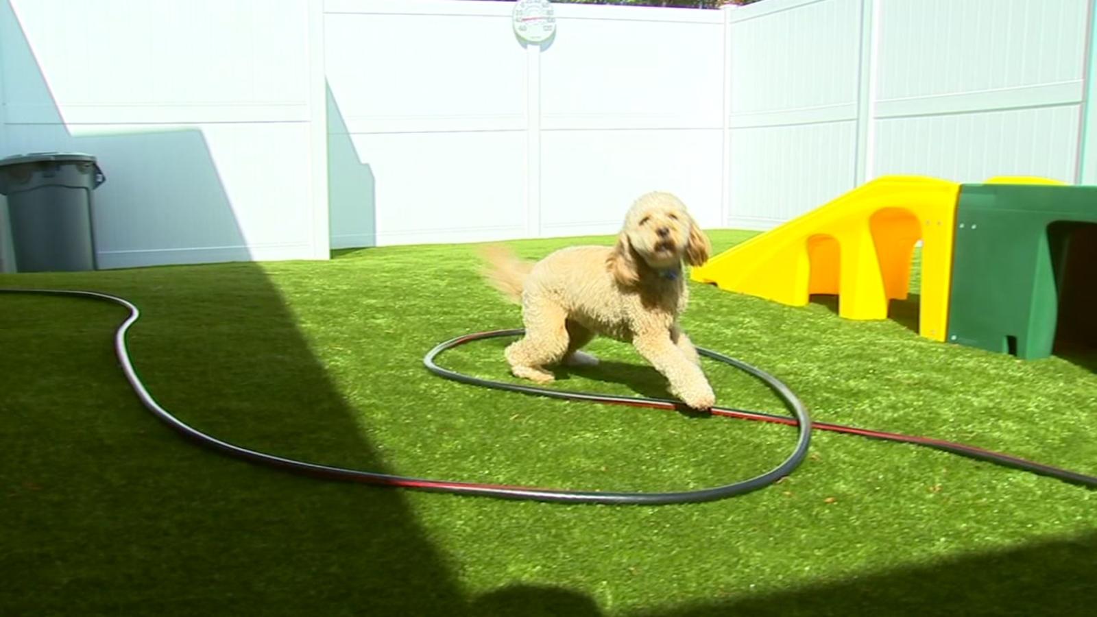 Apex posh pet resort puts dogs in the lap of luxury