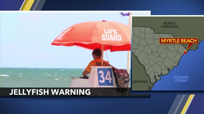 Beachgoers warned of jellyfish on Myrtle Beach shores