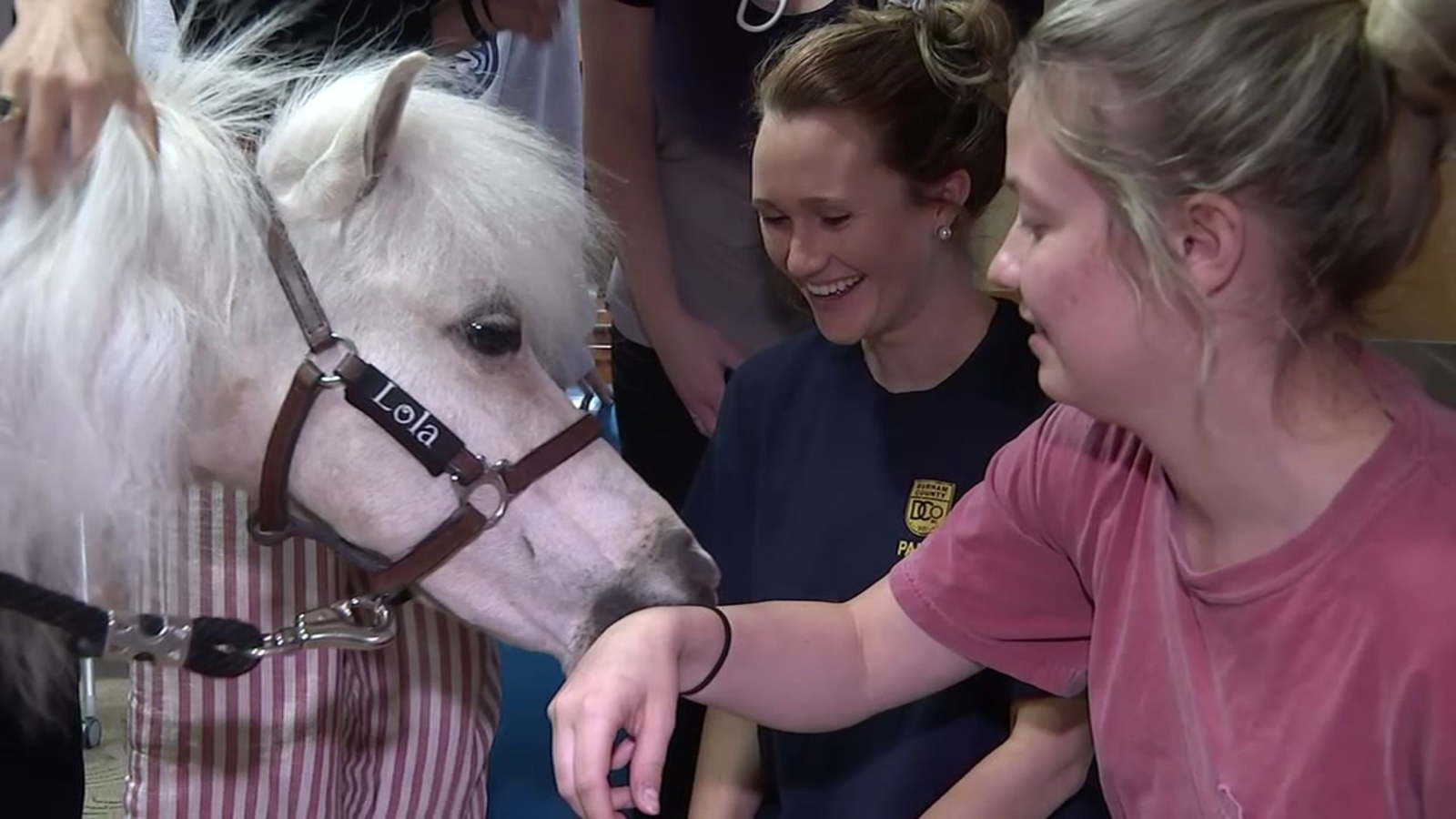 WATCH: Miniature horses visit UNC during exam week