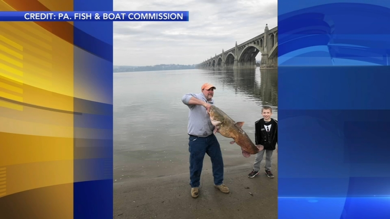 Record 50 pound catfish caught in Pa