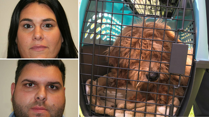 Long Island couple accused of killing 2 puppies, injuring 3rd