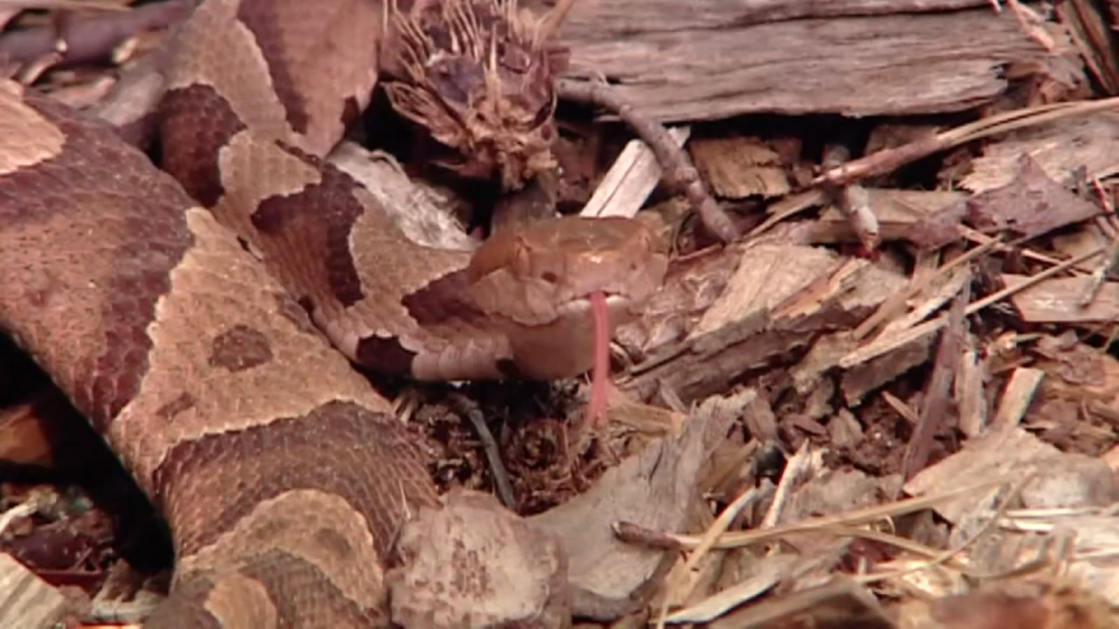 Snake blamed for Fayetteville power outage Tuesday morning