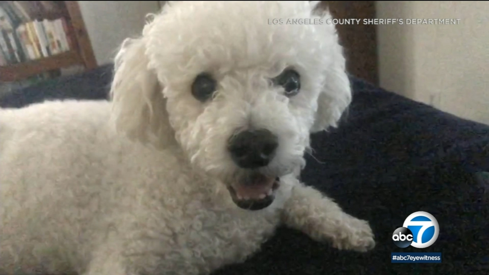 Dog, 13, who requires daily meds stolen from San Dimas family