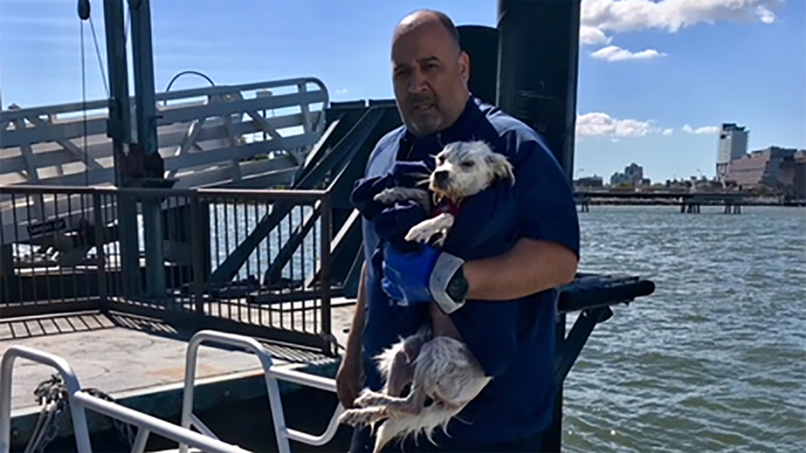 NYPD saves dog swept away by tide in East River near Brooklyn