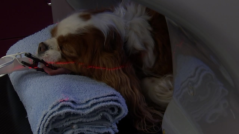 Scanning technology could boost your pet's heatlh