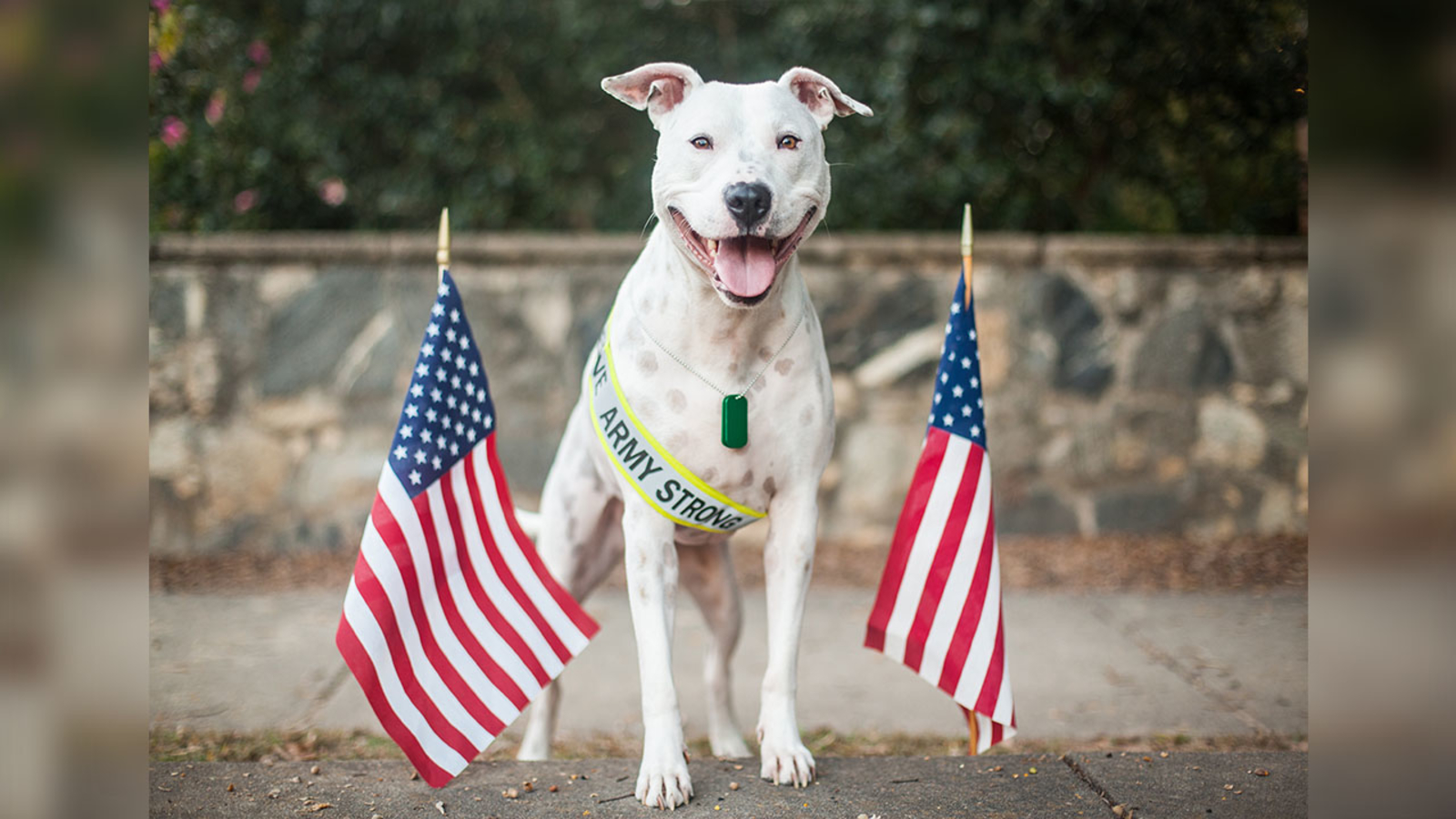 SPCA of Wake County waives pet adoption fees for veterans, military families through Memorial Day