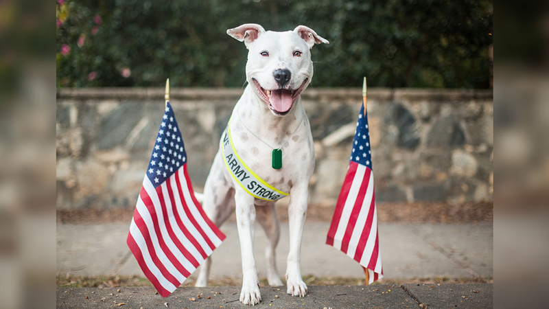 SPCA of Wake County waives adoption fees for veterans through Memorial Day