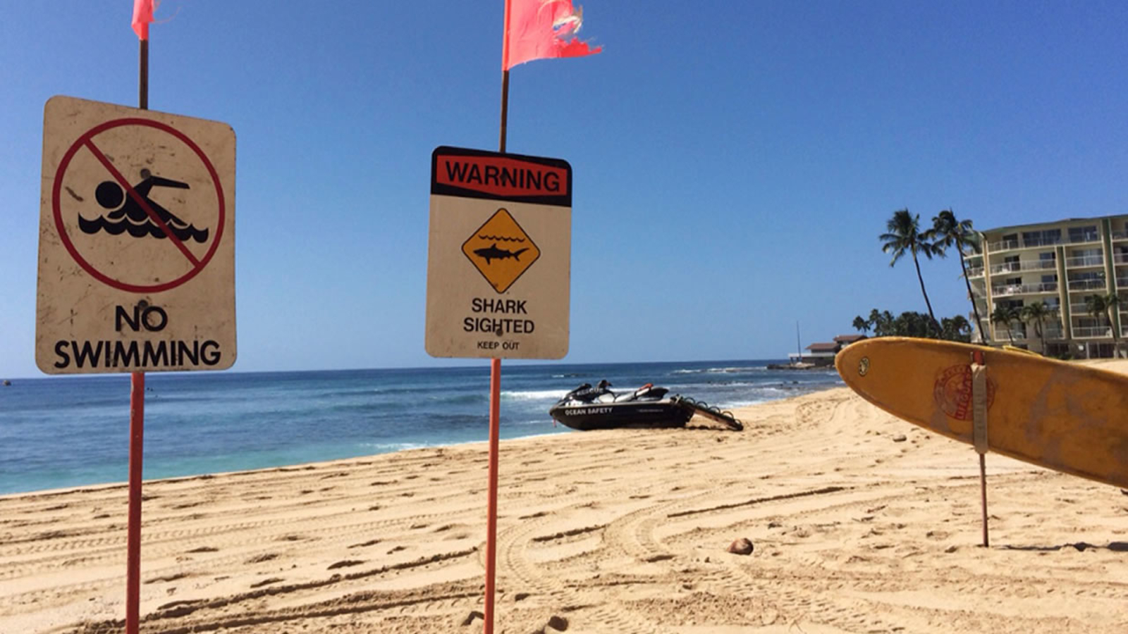 a5b9083a 65-year-old California man killed by shark in Hawaii | abc7.com