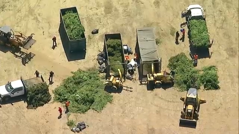 Riverside County Sheriff's Dept  investigates illegal marijuana grows