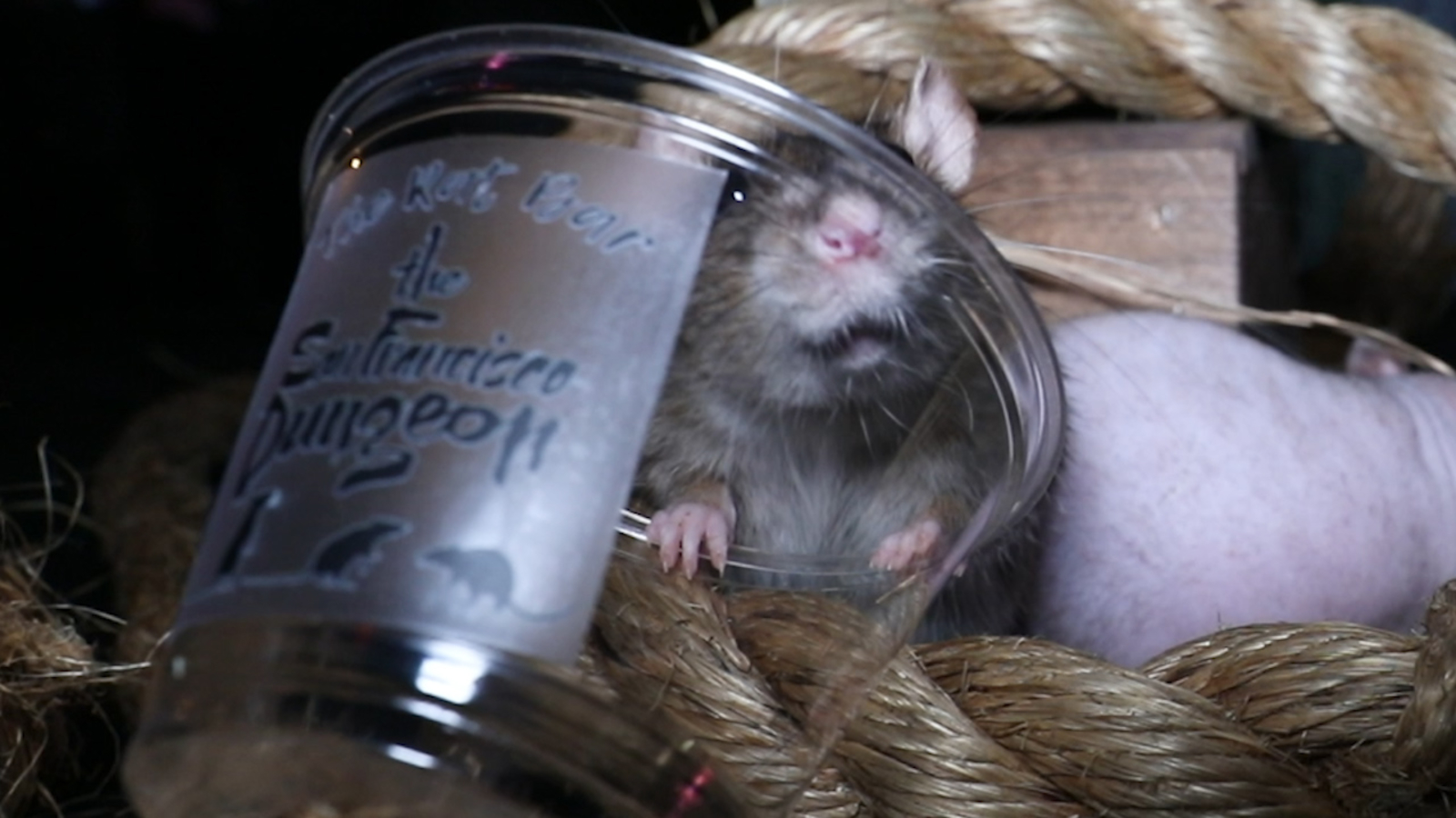 Pop-up 'Rat Bar' in San Francisco lets patrons eat and drink with rodents