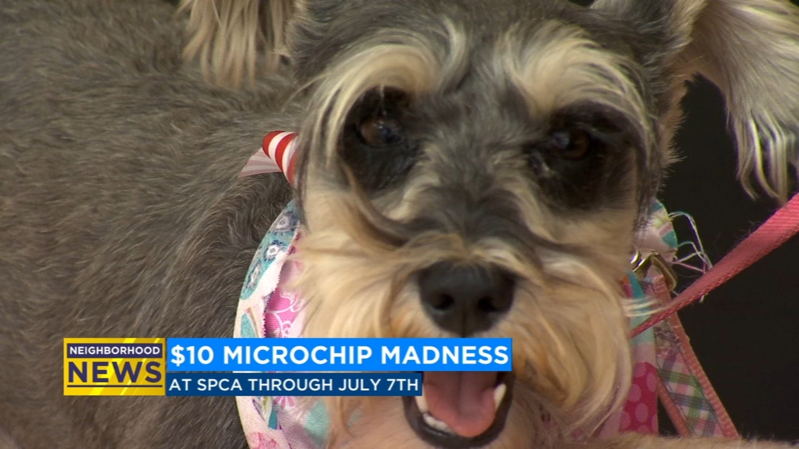 Get your dogs, cats microchipped for $10 at the CCSPCA