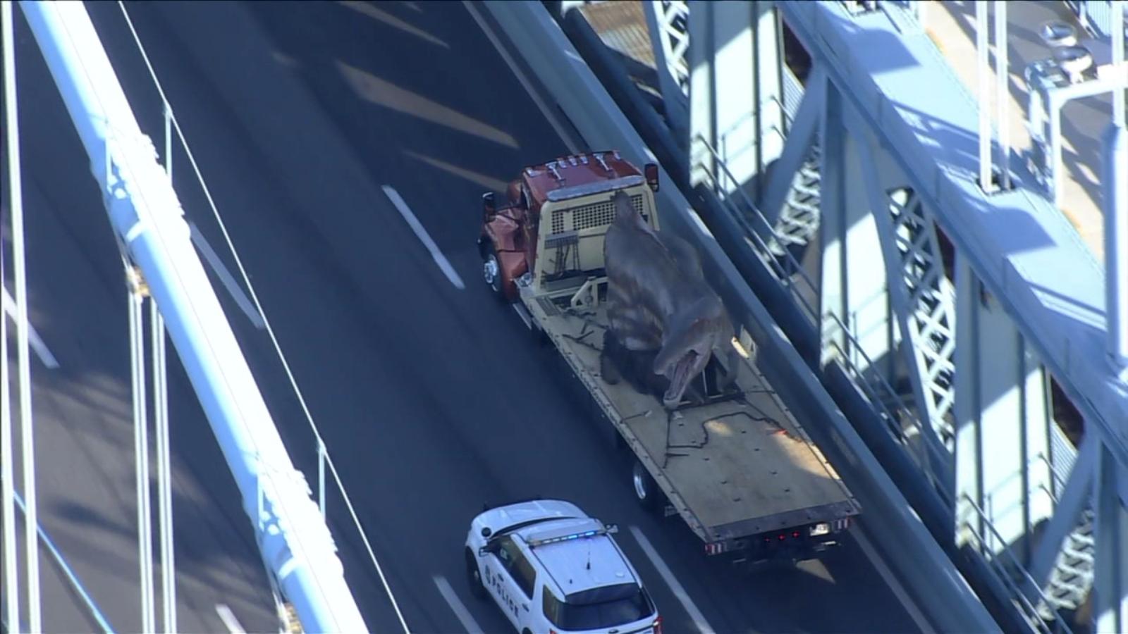 Animatronic dinosaur travels across Ben Franklin Bridge