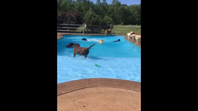 Day care throws pool \'pawty\' for group of dogs   6abc.com