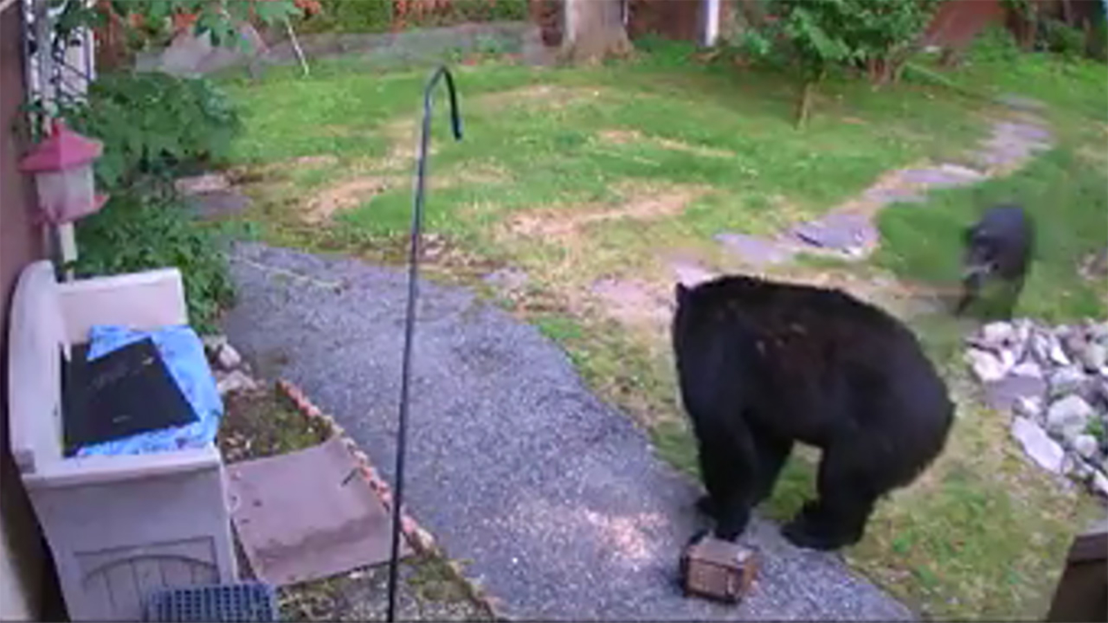 Video shows dog scaring off backyard bear in Hewitt - 6abc ...