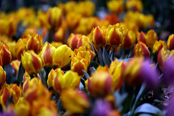 """<div class=""""meta image-caption""""><div class=""""origin-logo origin-image none""""><span>none</span></div><span class=""""caption-text"""">Shown are flowers at the """"Celebrate the Movies"""" themed Philadelphia Flower Show on Friday, Feb. 27, 2015, at the Pennsylvania Convention Center in Philadelphia. (Photo/Matt Rourke)</span></div>"""