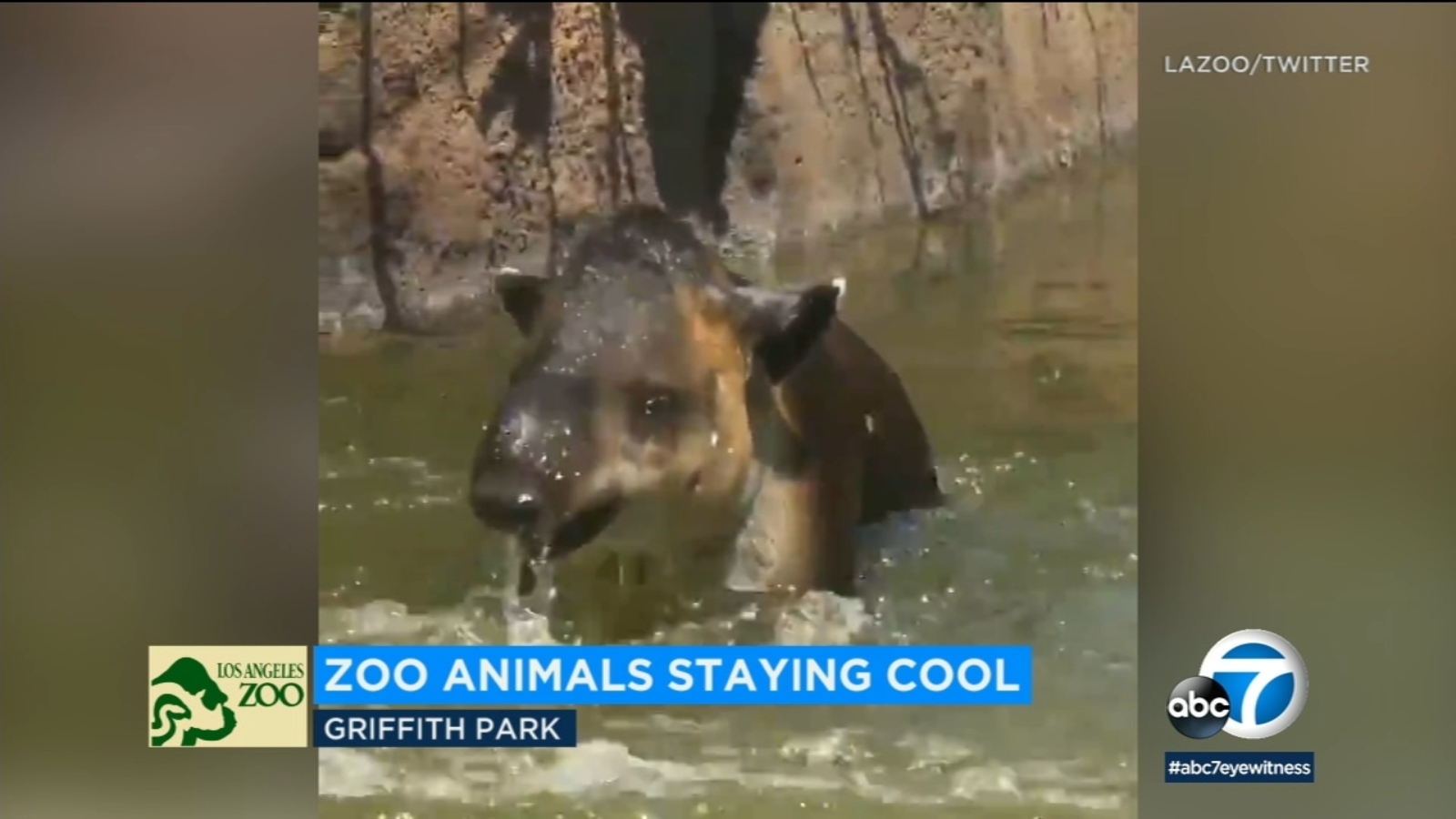 ADORABLE VIDEO: Animals cool off at the L.A. Zoo