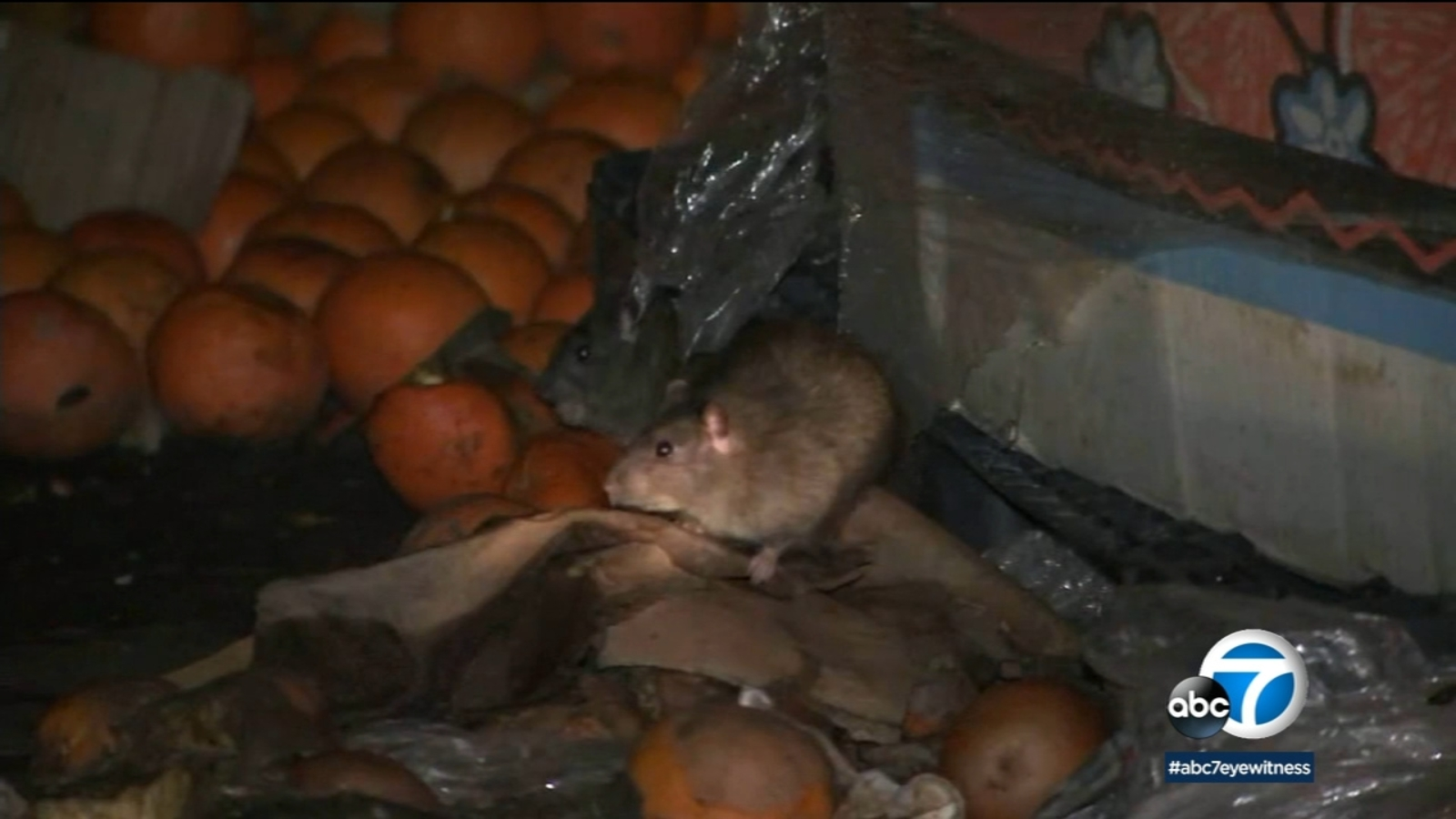 Rats overrunning California and government officials making problem worse, group claims